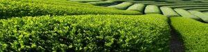 Green-Teafield